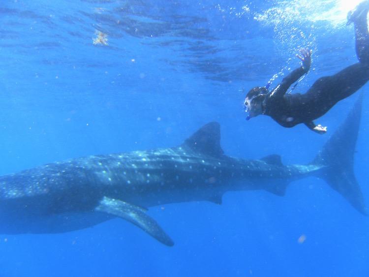 Aquatex Swim Water Polo Team News