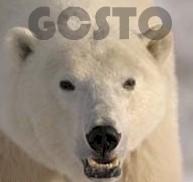 Greater Columbus Swim Team Of Ohio About Gcsto
